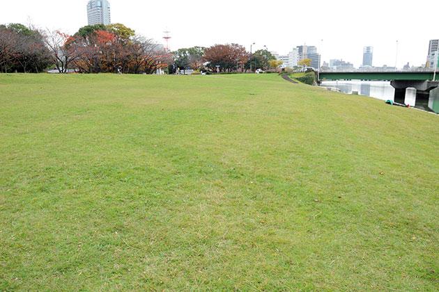 20111206shiba.jpg