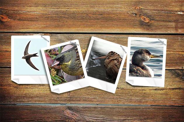 20111229birds.jpg