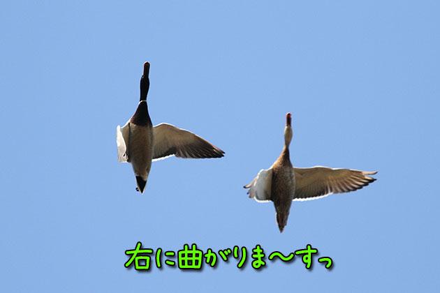20120108magamo.jpg