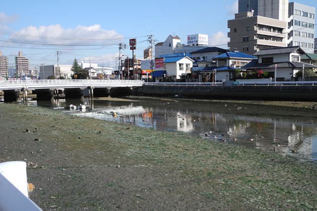 20121217hidorigamo02.jpg