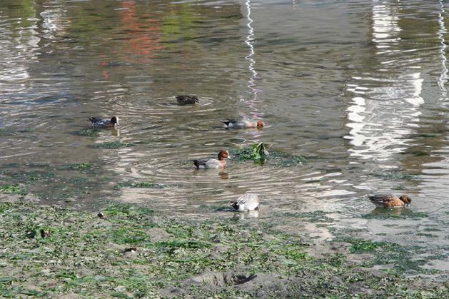 20121217hidorigamo.jpg