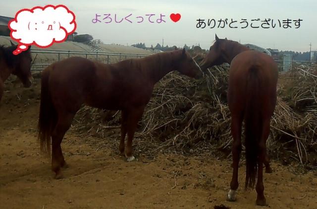 2013_11_25_12_43_52.jpg