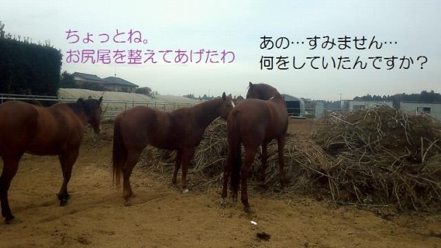 2013_11_25_12_44_04.jpg