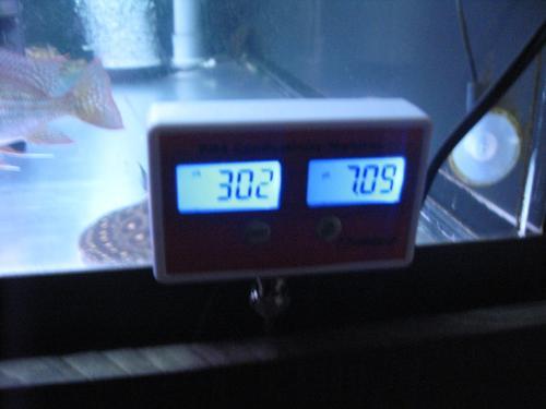 本日メイン水槽PH伝導率