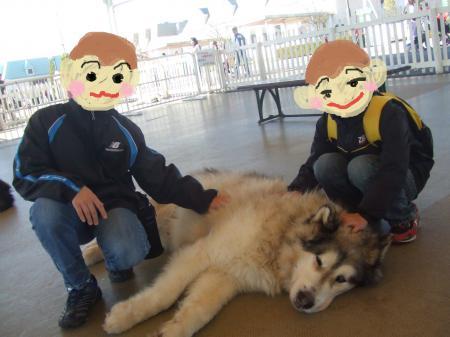 モンキーたちと大型犬