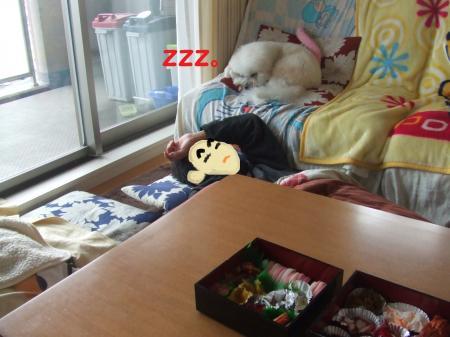 ボス寝る。