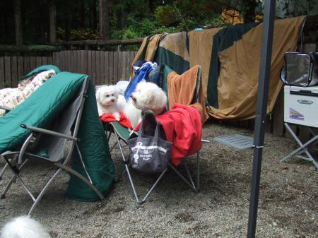 モフキャンプにて。