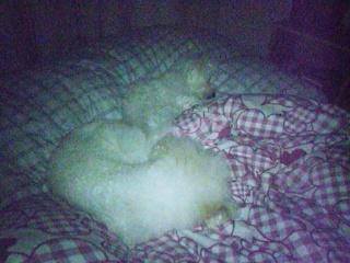 ベッドにて。