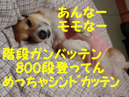P2170319.jpg