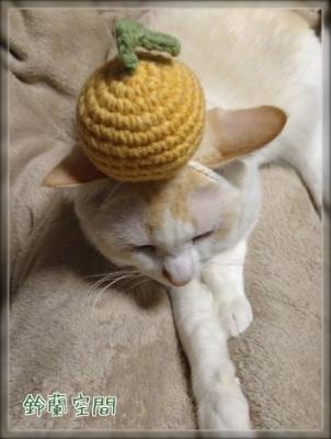 編みみかん試着 はくちゃん