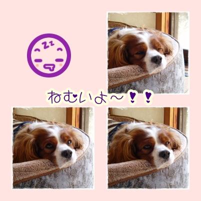 寒い朝は、眠いです!!
