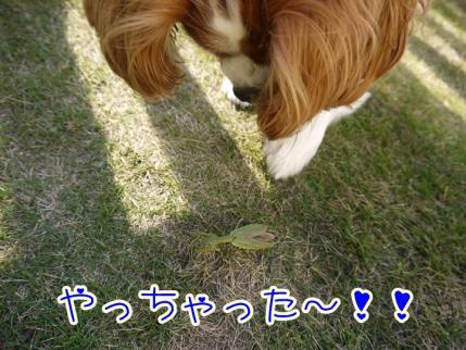 クッキー☆パンチ!!
