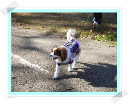 のんびりお散歩!!
