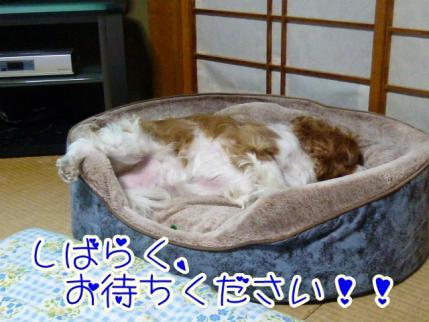 すごい寝相です!!