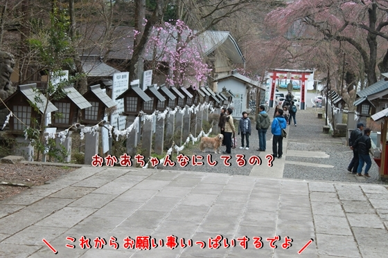 IMG_8451_R.jpg