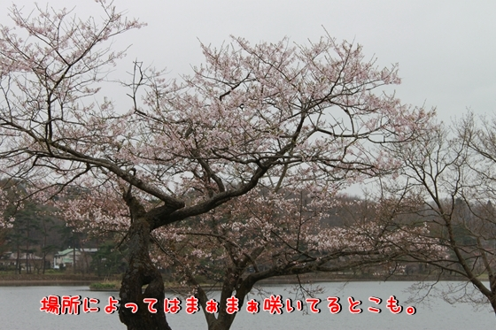 IMG_8456_R.jpg