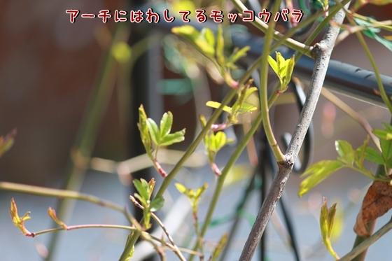IMG_8464_R.jpg