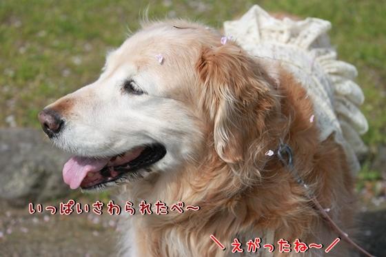 IMG_8648_R.jpg