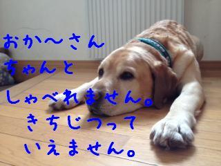 ___20130214150304.jpg