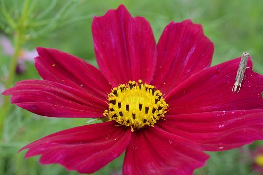 130914-09flower02.jpg