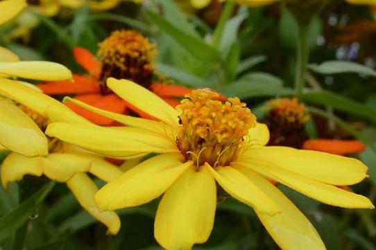 130914-13flower03.jpg