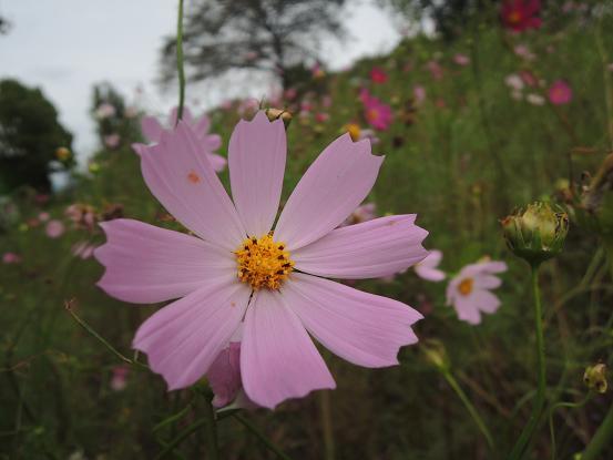 130923-13flower01.jpg