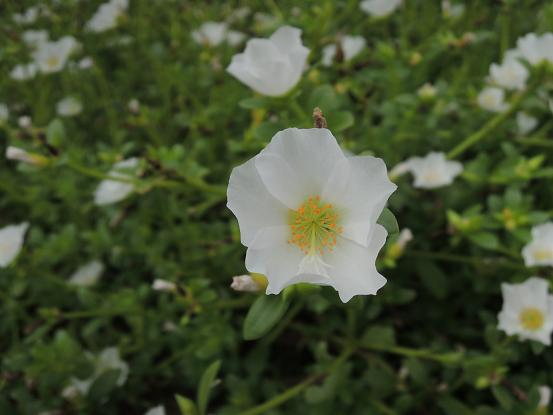 130923-14flower02.jpg