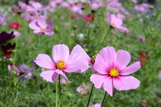 130928-08flower01.jpg