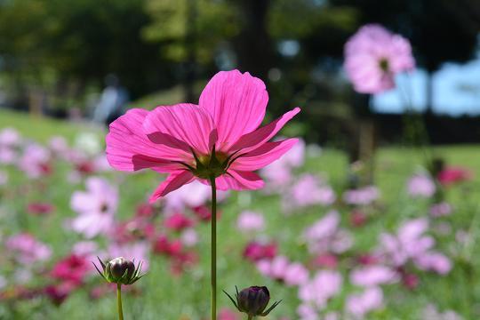 130928-09flower02.jpg