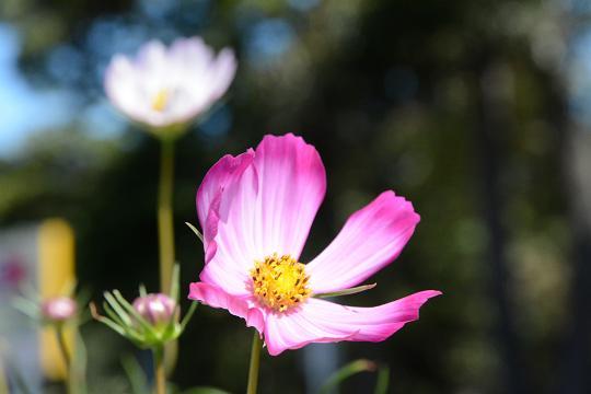 130928-10flower03.jpg