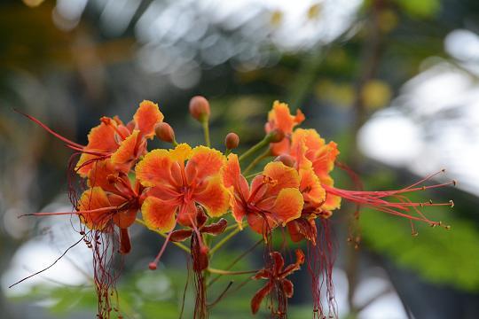131019-29flower03.jpg
