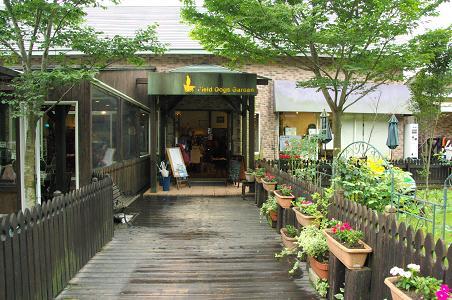 100626-01field dogs garden