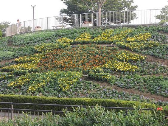 130812-03sun flower