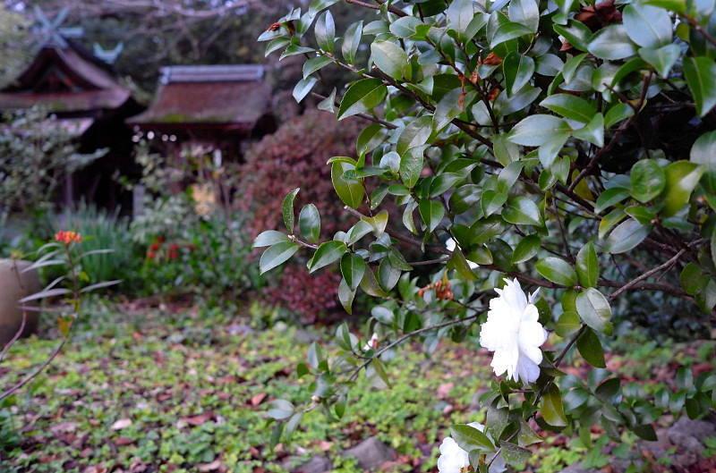 2014Blog5803.jpg