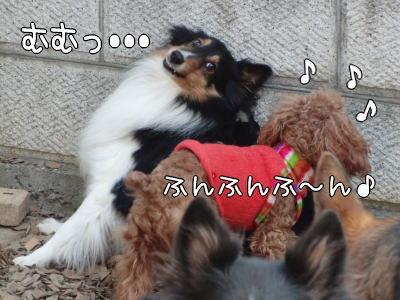 3_20110126155351.jpg