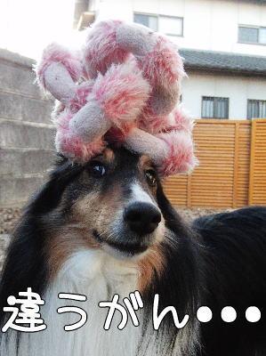 3_20110203185109.jpg