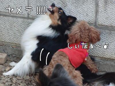 4_20110126155350.jpg