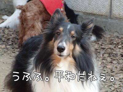 5_20110126155350.jpg