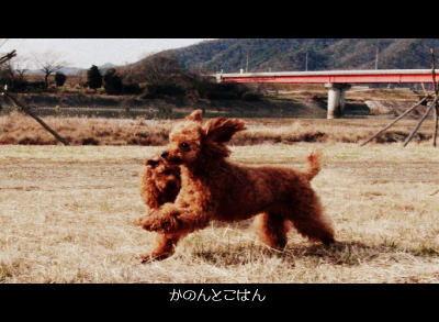 7_20110219191144.jpg
