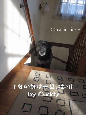 buddy01
