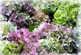 violetblue-seika-275.jpg