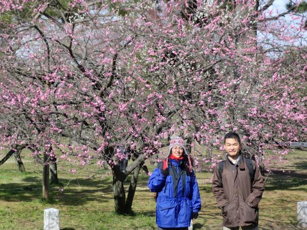 カウチサーフィン(スペイン)、京都御所にて。(梅の花)