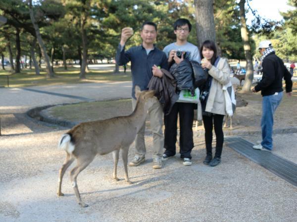 カウチサーフィン(中国・香港、アイシーとアーロン)、奈良公園の鹿。