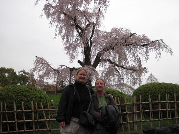 カウチサーフィン(スイス、アンとギィアート)、円山公園のしだれ桜。
