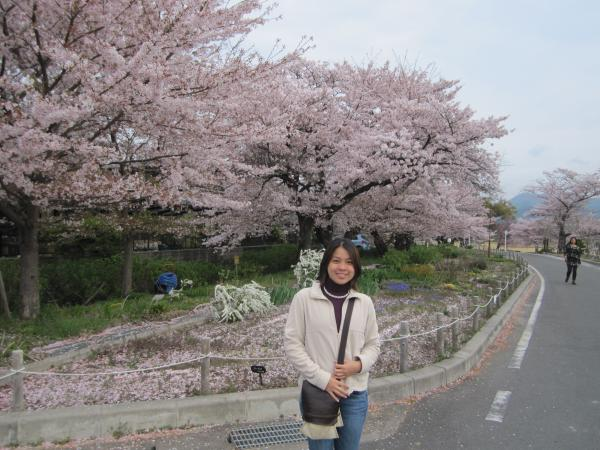 CouchSurfing(嵐山・桂川サイクリングロードの桜。)