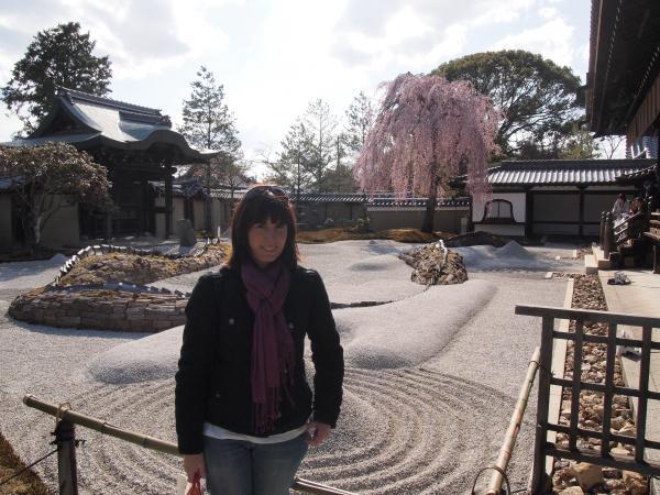 CouchSurfing(高台寺のしだれ桜。)