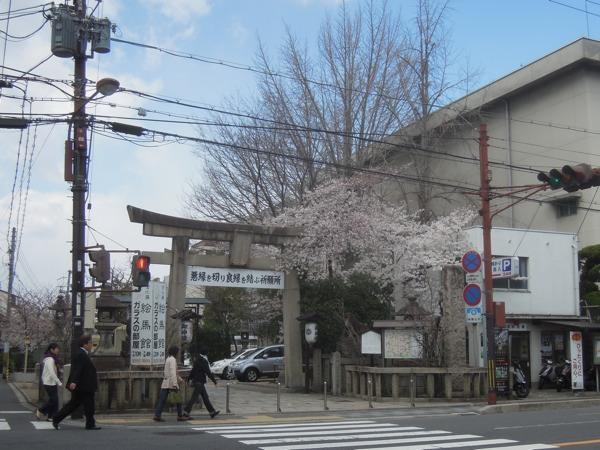 安井金毘羅宮の入り口の桜。