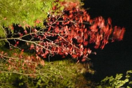 紅葉まつり