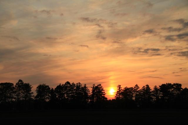 033木と木の間の夕日