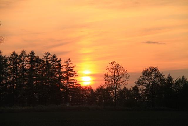 036夕日にてらさた木々